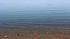 Ειρηνικό νερό riverbank που ρέει ήπια με τους περιστασιακούς κυματισμούς στο νερό Ρηχά νερά με την άμμο ορατή φιλμ μικρού μήκους