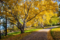 Ειρηνικό πάρκο με τα χρώματα φθινοπώρου στα δέντρα Στοκ εικόνα με δικαίωμα ελεύθερης χρήσης