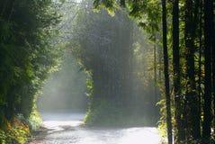 ειρηνικό πλαίσιο τροπικών δασών εισόδων Στοκ φωτογραφία με δικαίωμα ελεύθερης χρήσης