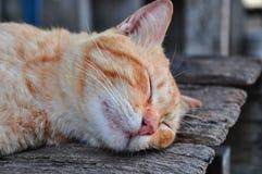 Ειρηνικό πορτοκαλί γατάκι που κατσαρώνουν επάνω να κοιμηθεί Στοκ Εικόνες