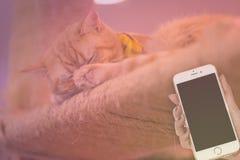 Ειρηνικό πορτοκαλί τιγρέ αρσενικό γατάκι γατών που κατσαρώνουν επάνω να κοιμηθεί Στοκ εικόνα με δικαίωμα ελεύθερης χρήσης