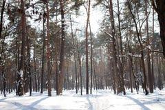 Ειρηνικό τοπίο του αραιού δάσους στο χιονώδες πρωί στοκ φωτογραφίες