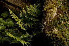 Ειρηνικό τροπικό δάσος Καναδάς δυτικών ακτών Στοκ Εικόνες