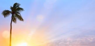 Ειρηνικό τροπικό υπόβαθρο  Ηλιοβασίλεμα στον τροπικό κύκλο Στοκ εικόνα με δικαίωμα ελεύθερης χρήσης