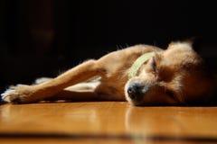 Ειρηνικό Slumber στοκ φωτογραφία με δικαίωμα ελεύθερης χρήσης