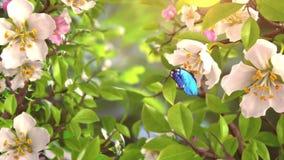 Εισαγωγή με τις πεταλούδες και τα ανθίζοντας λουλούδια απόθεμα βίντεο