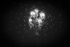 Εισβολή πεταλούδων στην κόκκινη πλατεία Στοκ Εικόνα