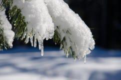 λειώνοντας χιόνι Στοκ Φωτογραφίες