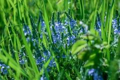 ειδικό λουλούδι Στοκ εικόνες με δικαίωμα ελεύθερης χρήσης