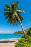 Ειδυλλιακή σημαντική παραλία Anse φοινικών παραδείσου - νησί Mahe, Σεϋχέλλες Στοκ φωτογραφίες με δικαίωμα ελεύθερης χρήσης