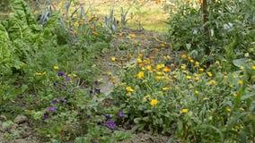 Ειδυλλιακός κήπος με τα λουλούδια απόθεμα βίντεο