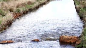 Ειδυλλιακός ποταμός τοπίων με τις πέτρες απόθεμα βίντεο