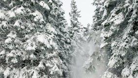 Ειδυλλιακός χειμώνας των χιονωδών κομψών δέντρων απόθεμα βίντεο