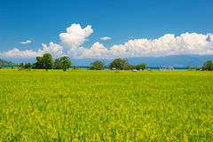 Ειδυλλιακό ασιατικό τοπίο τομέων ρυζιού Στοκ Εικόνες