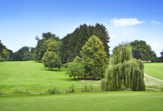 Ειδυλλιακό γήπεδο του γκολφ με το δάσος Στοκ Εικόνες