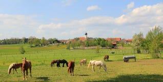Ειδυλλιακό τοπίο χωρών με τη βοσκή των αλόγων και λίγου χωριού, Στοκ εικόνες με δικαίωμα ελεύθερης χρήσης