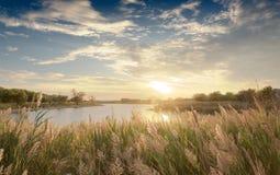 εκθαμβωτικό ηλιοβασίλ&epsil στοκ εικόνες
