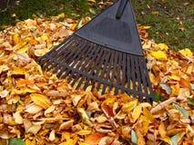 εκκαθάριση φύλλων φθινο&pi Στοκ φωτογραφία με δικαίωμα ελεύθερης χρήσης
