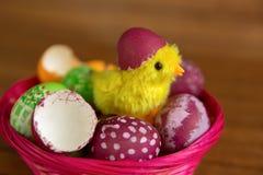 Εκκόλαψη αυγών και νεοσσών Πάσχας από το κοχύλι, κινηματογράφηση σε πρώτο πλάνο Στοκ φωτογραφία με δικαίωμα ελεύθερης χρήσης