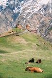 Εκκλησία ή Tsminda Sameba τριάδας Gergeti - ιερή εκκλησία Ν τριάδας Στοκ Εικόνες