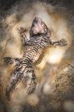 Εκλείψας έρπων σκελετός στην απολιθωμένη πέτρα Στοκ Εικόνα
