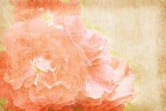 Εκλεκτής ποιότητας έγγραφο λουλουδιών bacground Στοκ Εικόνα