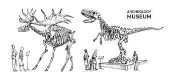Εκλεκτής ποιότητας αρχαιολογικό μουσείο Οι επισκέπτες εξετάζουν το έκθεμα Ιστορικός σκελετός ενός εκλείψα ζωικού δεινοσαύρου διανυσματική απεικόνιση