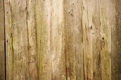 εκλεκτής ποιότητας δάσο Στοκ εικόνες με δικαίωμα ελεύθερης χρήσης