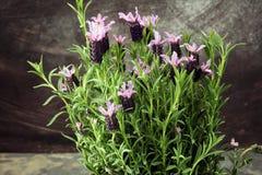 Εκλεκτής ποιότητας δοχείο λουλουδιών ύφους και σε δοχείο lavender εγκαταστάσεις Στοκ εικόνα με δικαίωμα ελεύθερης χρήσης