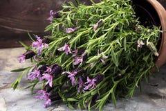 Εκλεκτής ποιότητας δοχείο λουλουδιών ύφους και σε δοχείο lavender εγκαταστάσεις Στοκ φωτογραφία με δικαίωμα ελεύθερης χρήσης