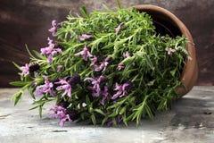 Εκλεκτής ποιότητας δοχείο λουλουδιών ύφους και σε δοχείο lavender εγκαταστάσεις Στοκ Φωτογραφίες
