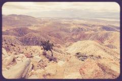 Εκλεκτής ποιότητας εθνικό πάρκο δέντρων του Joshua ύφους στοκ φωτογραφία