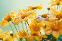 Εκλεκτής ποιότητας κίτρινη ανασκόπηση λουλουδιών Στοκ Φωτογραφίες