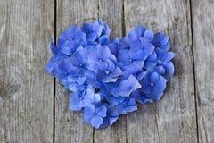 Εκλεκτής ποιότητας καρδιά από τα μπλε πέταλα hortensia Στοκ φωτογραφίες με δικαίωμα ελεύθερης χρήσης