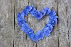 Εκλεκτής ποιότητας καρδιά από τα μπλε πέταλα hortensia Στοκ Εικόνες
