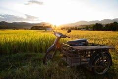 Εκλεκτής ποιότητας μηχανικό δίκυκλο και καρότσα στον τομέα ρυζιού στοκ φωτογραφίες με δικαίωμα ελεύθερης χρήσης