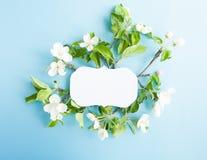 Εκλεκτής ποιότητας πλαίσιο με το μήλο ανθών στο μπλε υπόβαθρο Στοκ εικόνες με δικαίωμα ελεύθερης χρήσης