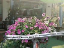 Εκλεκτής ποιότητας ποδήλατο με το ρόδινο λουλούδι στοκ εικόνα