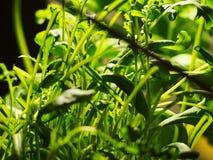 Εκλεκτής ποιότητας πράσινος φρέσκος ύφους Μακρο πράσινα φύλλα Πράσινη ανασκόπηση με τα φύλλα Στοκ Φωτογραφίες
