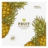 Εκλεκτής ποιότητας πρότυπο σχεδίου φρούτων ανανά Βοτανικά φρούτα Χαραγμένος ανανάς επίσης corel σύρετε το διάνυσμα απεικόνισης απεικόνιση αποθεμάτων