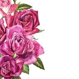 Εκλεκτής ποιότητας πρότυπο τριαντάφυλλων η διακοσμητική εικόνα απεικόνισης πετάγματος ραμφών το κομμάτι εγγράφου της καταπίνει το Στοκ Φωτογραφίες