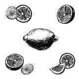 Εκλεκτής ποιότητας συρμένο χέρι λεμόνι μελανιού, που απομονώνεται στο άσπρο υπόβαθρο Στοκ Εικόνες