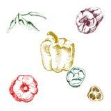 Εκλεκτής ποιότητας συρμένο χέρι σύνολο μελανιού διαφορετικών πιπεριών, που απομονώνεται στο άσπρο υπόβαθρο Στοκ φωτογραφίες με δικαίωμα ελεύθερης χρήσης
