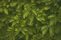 Εκλεκτής ποιότητας υπόβαθρο από τα φύλλα Στοκ Εικόνες