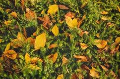Εκλεκτής ποιότητας υπόβαθρο φθινοπώρου στοκ φωτογραφία με δικαίωμα ελεύθερης χρήσης