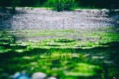 Εκλεκτής ποιότητας φύση ανεμοθύελλας υποβάθρου της Γερμανίας δέντρων στοκ φωτογραφία με δικαίωμα ελεύθερης χρήσης