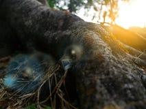 Εκλεκτικά μυρμήγκια εστίασης που σέρνονται στο φλοιό ενός δέντρου με το θερμό φως του ήλιου το βράδυ στοκ φωτογραφία