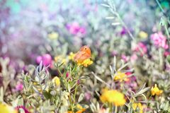 Εκλεκτική εστίαση σε λίγη πεταλούδα στο κίτρινο λουλούδι Στοκ Φωτογραφίες