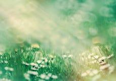 Εκλεκτική εστίαση στο λουλούδι μαργαριτών - όμορφη φύση την άνοιξη Στοκ φωτογραφία με δικαίωμα ελεύθερης χρήσης