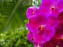 Εκλεκτική εστίαση όμορφη των πορφυρών λουλουδιών ορχιδεών στον κήπο Στοκ φωτογραφία με δικαίωμα ελεύθερης χρήσης